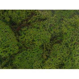 Mousse lichen islandais vert de mai 250 grammes - HEKI 3230