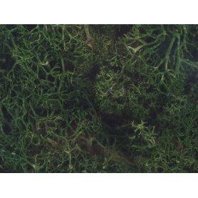 Mousse lichen islandais vert foncé 250 grammes - HEKI 3231